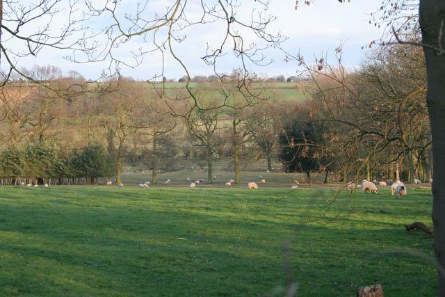 Sheep pasture at Kilthorpe Grange