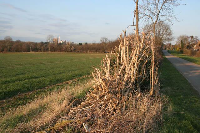 Farmland by Barrowden Road