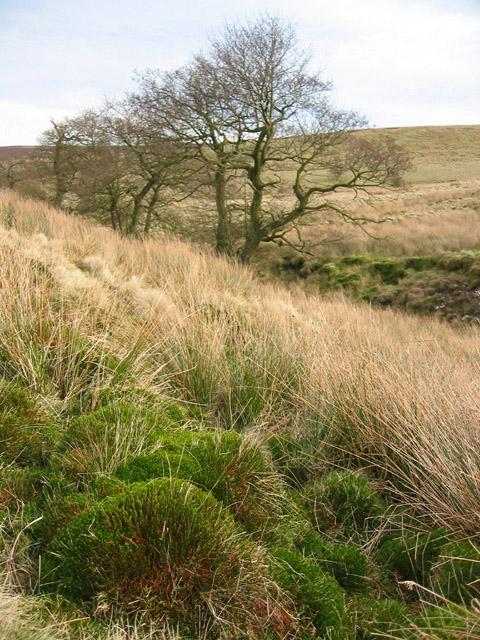 Moss tussocks