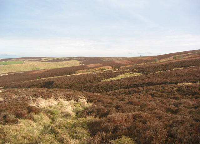 Moorland on Middle Hills: view ESE
