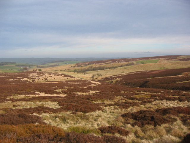 Moorland on Middle Hills: view east