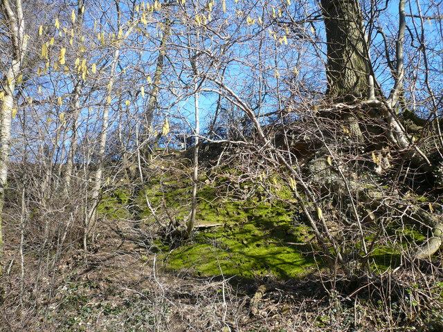 Pearce Lane - Springtime Hedgerow