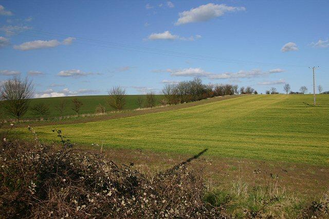 Fields near Clare