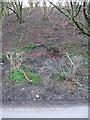 ST7058 : Small Landslip near Splott Farm by Phil Williams
