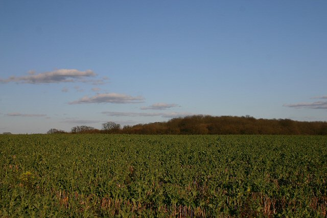 King's Wood, near Poslingford
