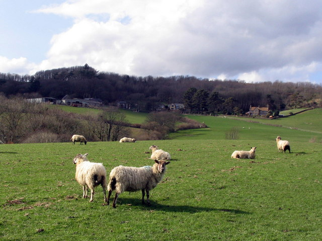Down House Farm and some sheep.