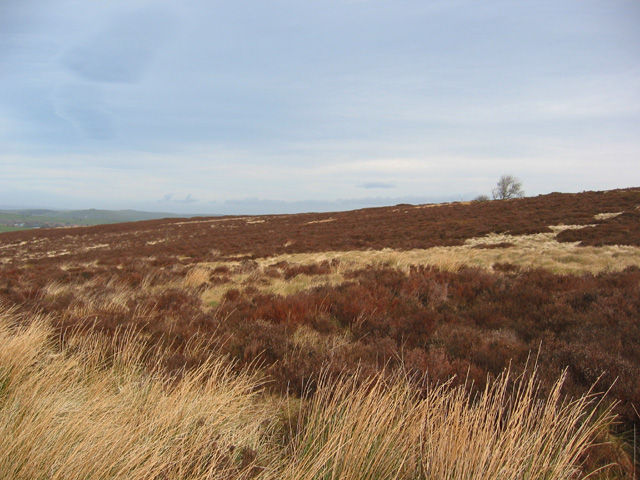 Moorland east of Boarsgrove
