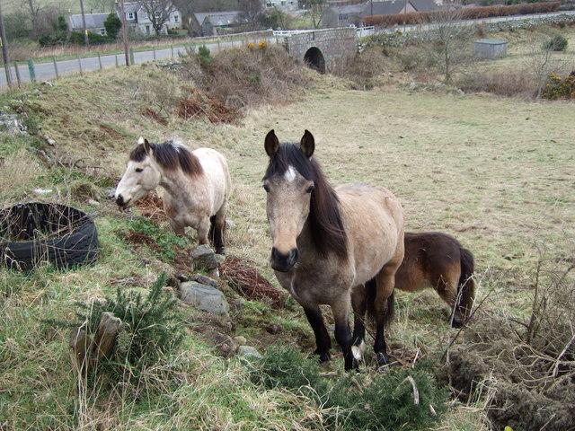 Horses by Bridge of Muchalls