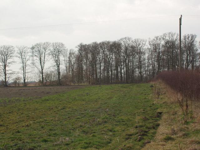 Trees near Spring House, Huby