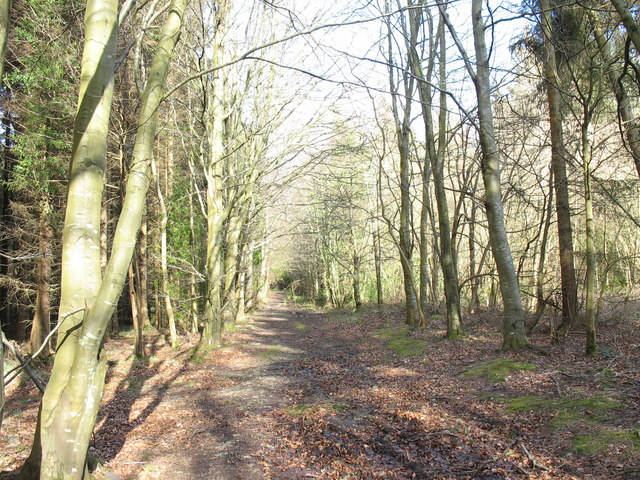 Ffordd y Meirw/The Avenue of the Dead, Vaynol Woods