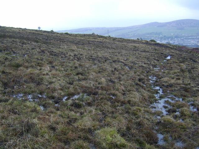 Deep bog area