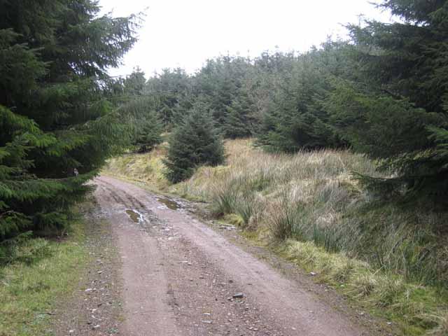 Forest road below Hope Edge