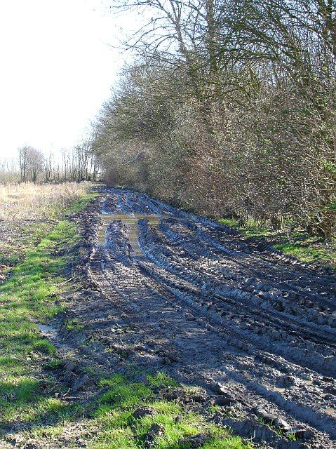 Muddy track by Frid Wood