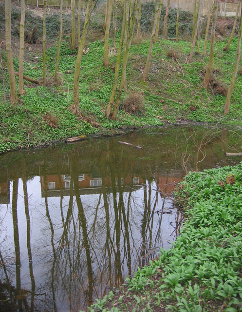 Small mere in woodland by Wistaston Green
