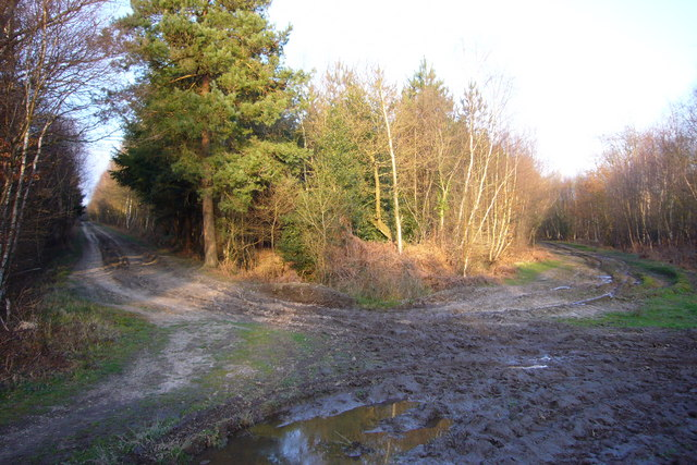 Track junction, Creech Woods