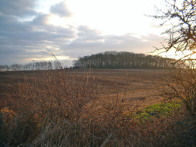 Cadborough Wood