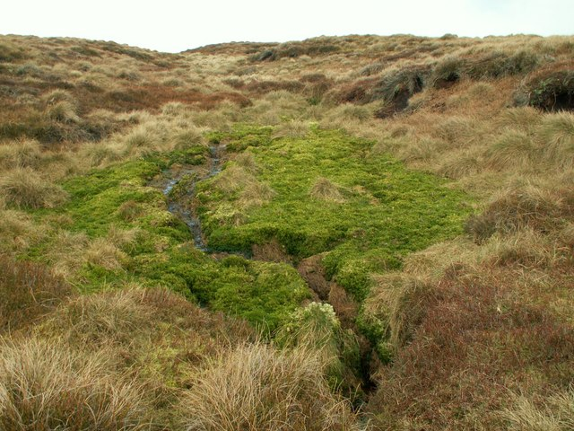 Blanket Bog Crowden Meadows