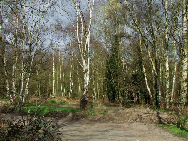 Bridleway in Highgate Country Park, Staffordshire