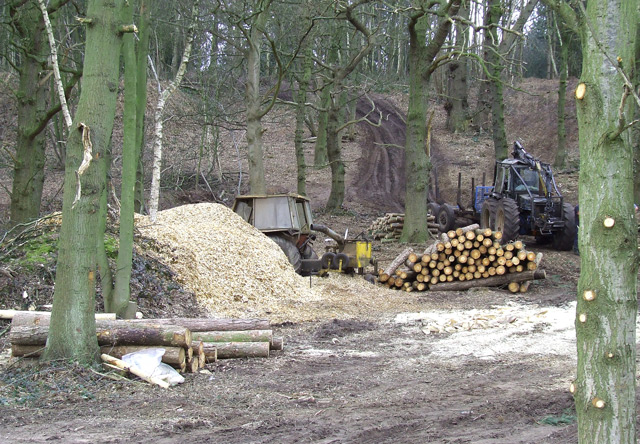Woodland Clearance at Blackhill Plantation, near Halfpenny Green, Staffordshire