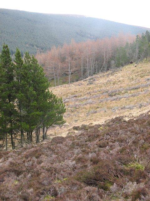 Forest edge, Glen Finlet
