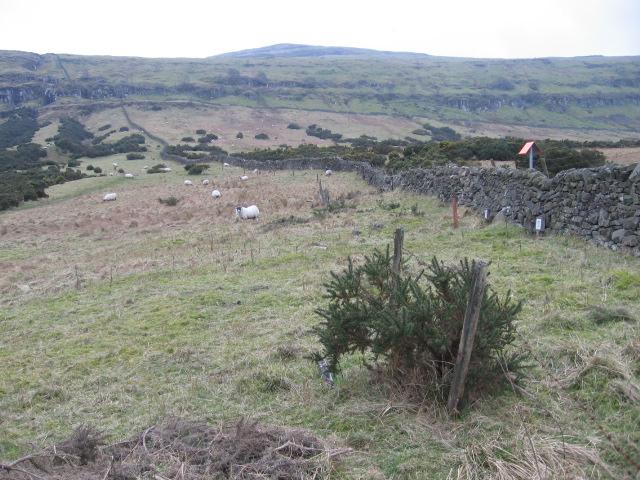 Below the Gargunnock Hills