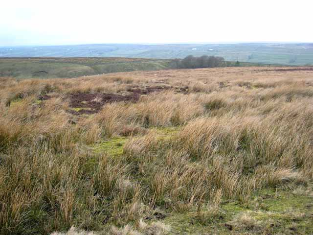 Moorland above Trough Heads