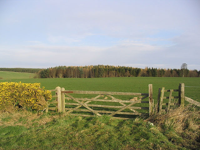 Grazing field at Whinny Hill