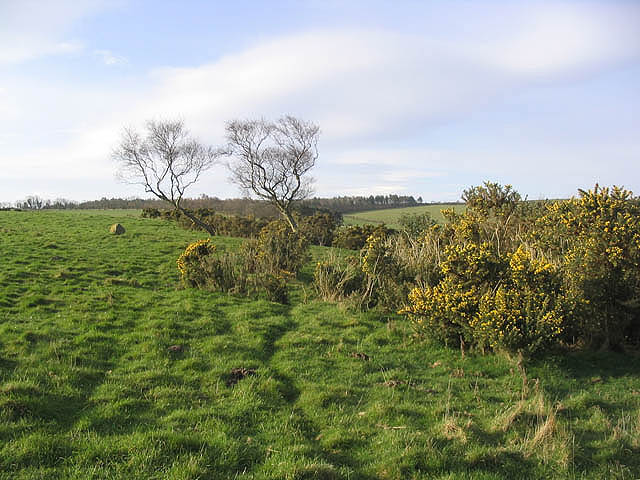 Pasture and gorse