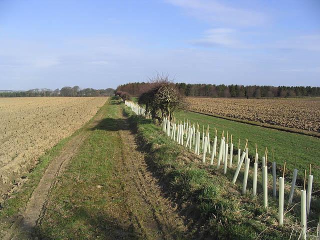 Farmland west of Littlehoughton