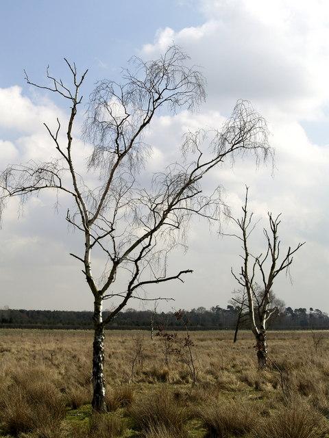 Trees on Hotham Carrs Marshland