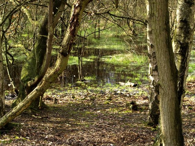 Hotham Carrs Marshland