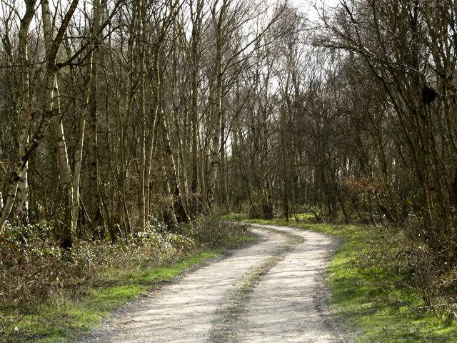 Hotham Carrs Woodland