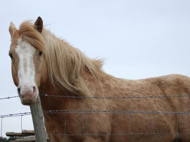 Horse near Upper Ashentilly