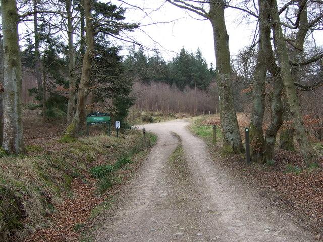Entrance to Warren Wood