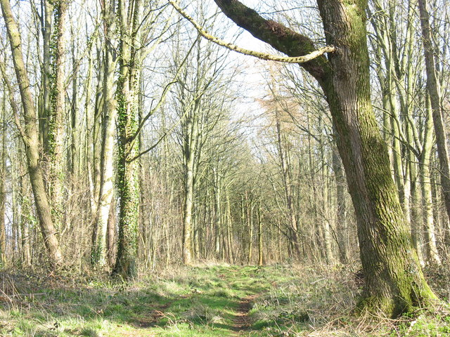 The path towards Bryntirion through Coed Twr