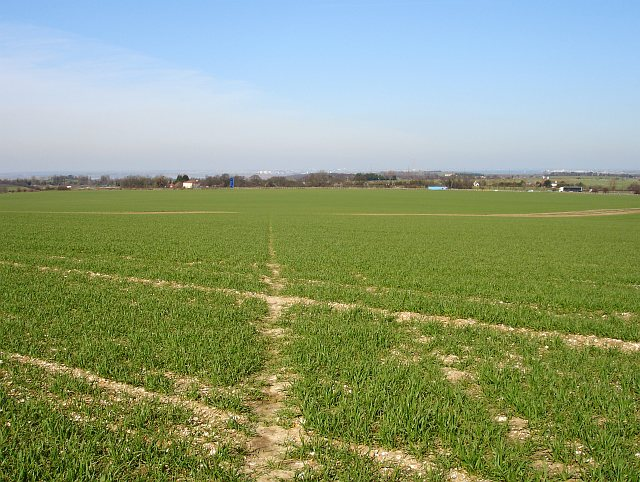 Footpath across cereal crop