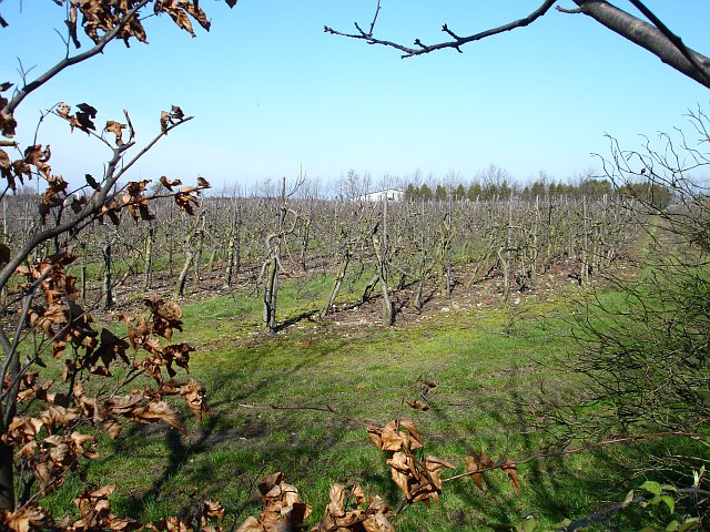 Orchard north of the motorway