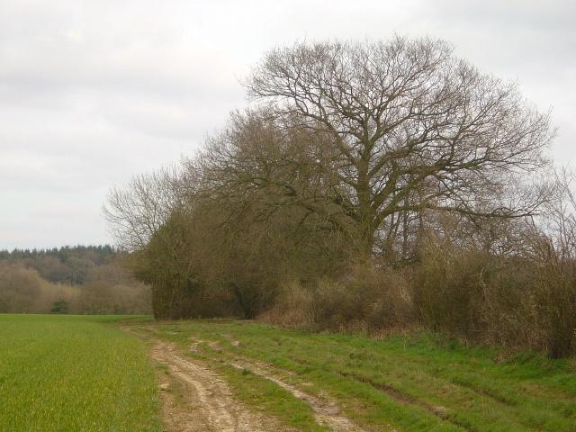 Farmland near Upper Wield