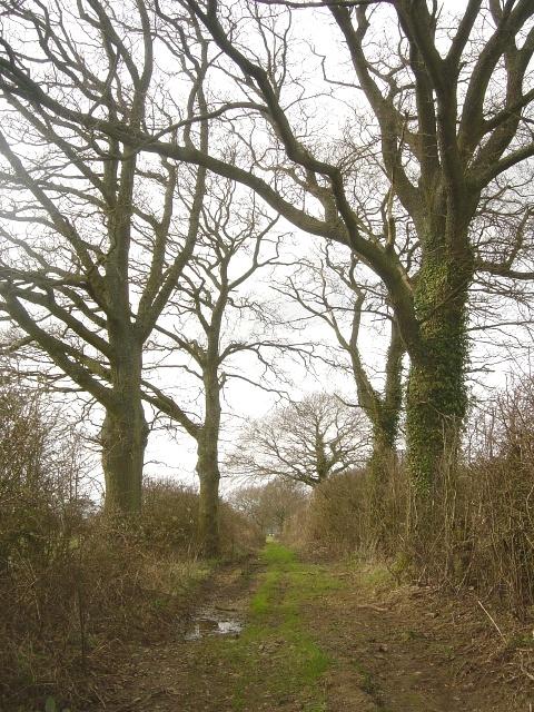 Footpath near Hattingley