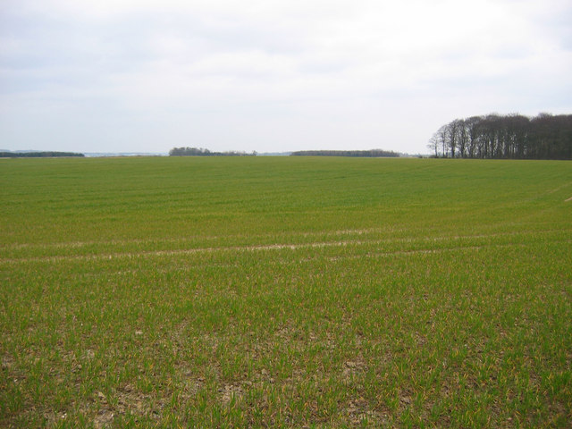 Farmland SE Of Burton Agnes