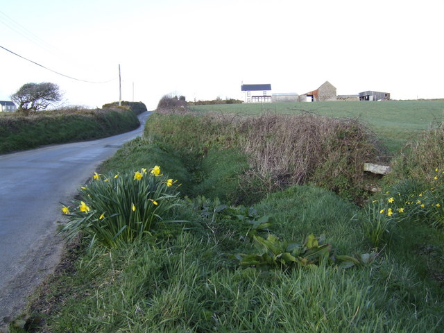 Roadside in spring