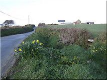 SW7132 : Roadside in spring by Jonathan Billinger