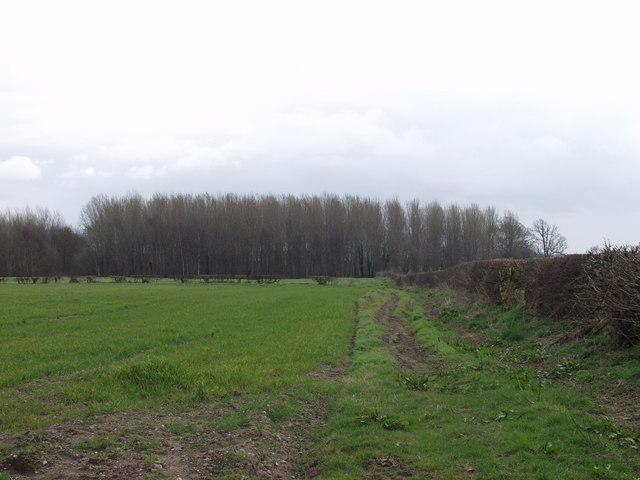 Poplar Plantation at Berghill