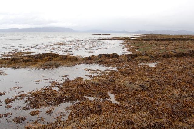 North shore of Rubha Ardnish