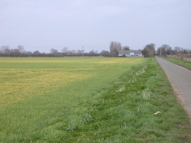 Wheat Field, Long Drove, Cottenham