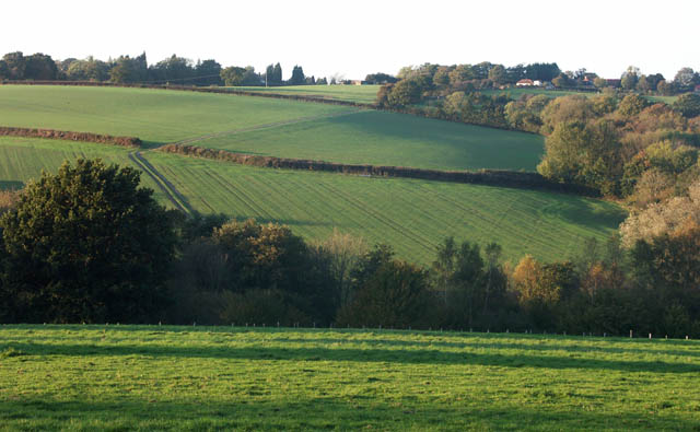 Fields north of Chitcombe