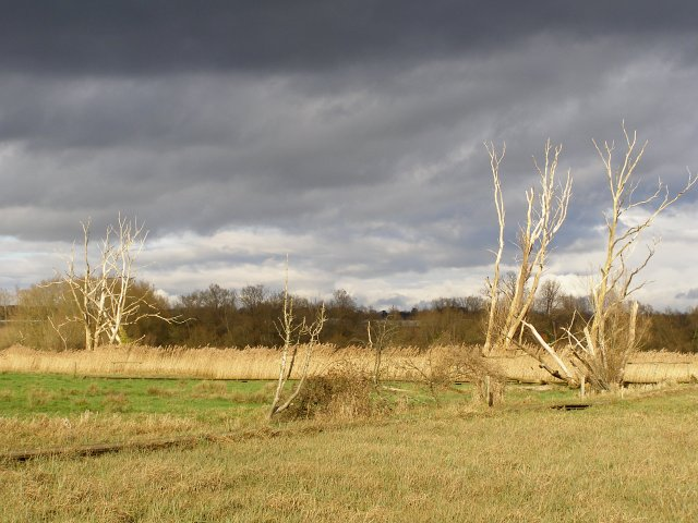 Dead trees and meadow, Ruddy Mead