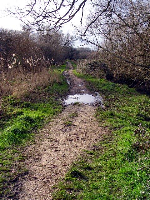 Test Way footpath to Ruddy Mead