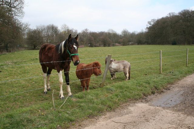 Horse and miniature horses, Old Basing, Hampshire