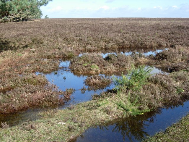 Waterlogged heath